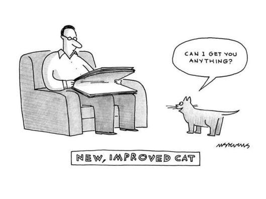 cat improve
