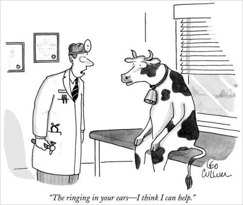 ringing cow