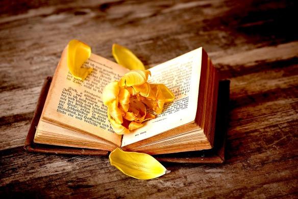 book-1291164_1280