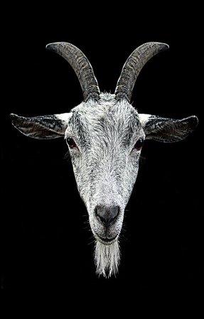 horns-457849_1280